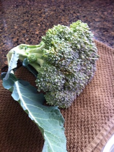 The First Broccoli Harvest
