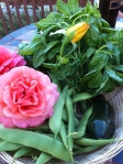 More Roses, Basil and Green Beans