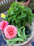 Roses, Basil and Green Beans