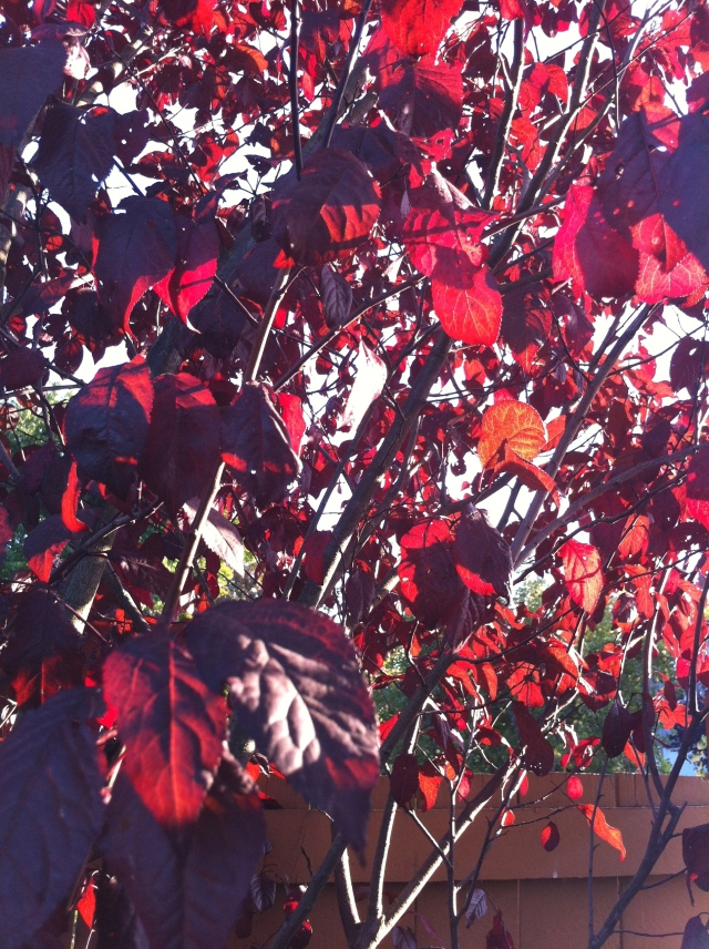Sunlight streaming through the Flowering Plum tree