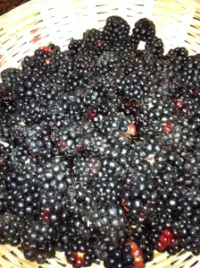 Just Picked Wild Blacberries