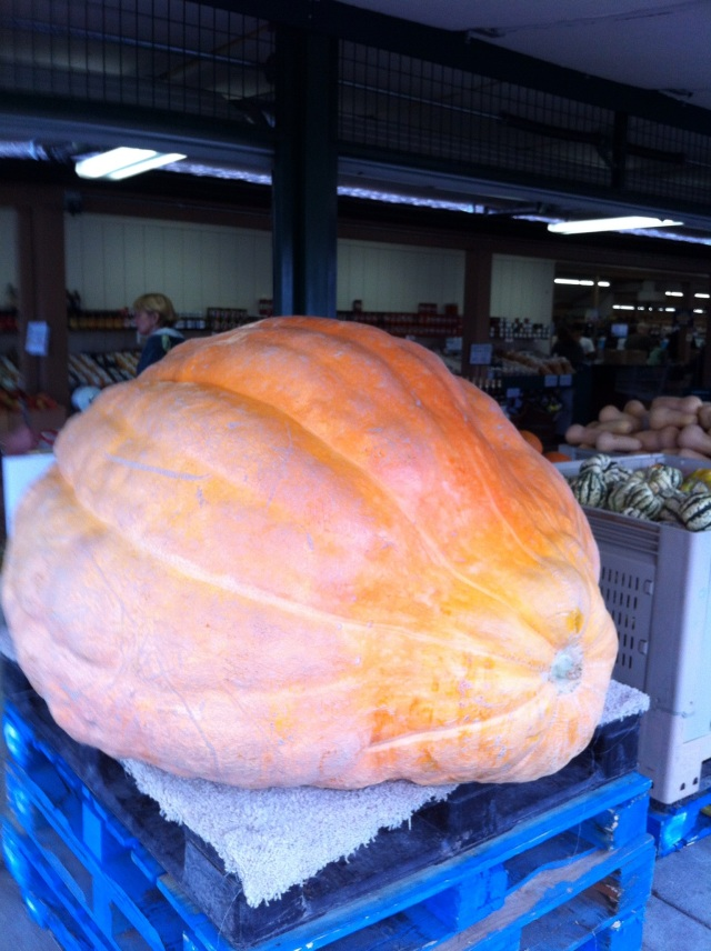 Side View of The Giant Pumpkin