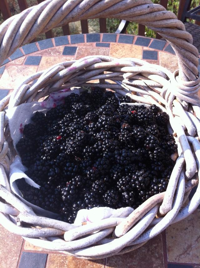 Wild Blackberry Harvest