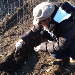 Nana planting our 2015 peas